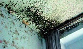 schimmel mit fachgerechter d mmung vermeiden fmi fachverband mineralwolleindustrie e v. Black Bedroom Furniture Sets. Home Design Ideas